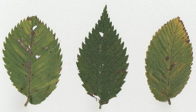 Variation In Plants Purpose of Making a Pl...